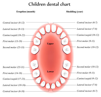Children Dentist, Infant, Pediatric Dentist Colorado Springs
